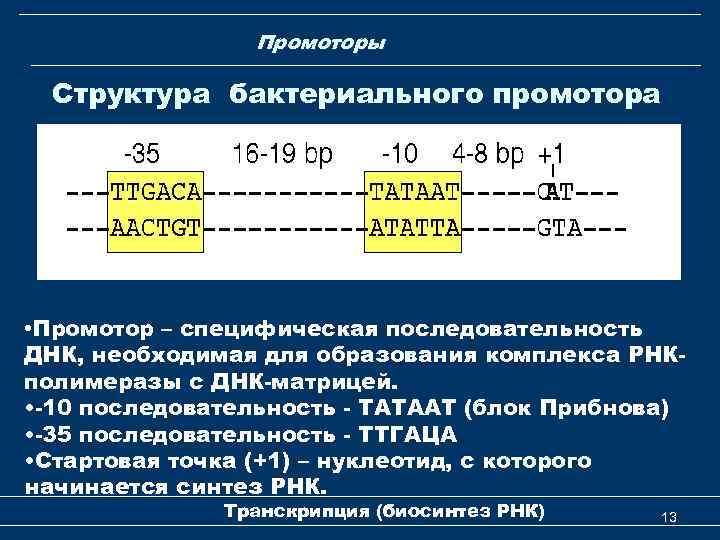 Промоторы Структура бактериального промотора • Промотор – специфическая последовательность ДНК, необходимая для образования комплекса