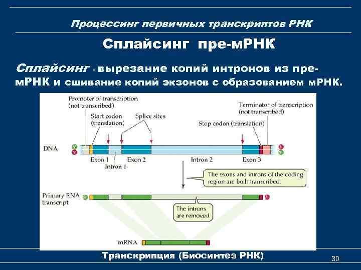 Процессинг первичных транскриптов РНК Сплайсинг пре-м. РНК Сплайсинг - вырезание копий интронов из пре-