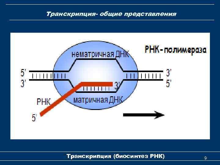 Транскрипция- общие представления Транскрипция (биосинтез РНК) 9