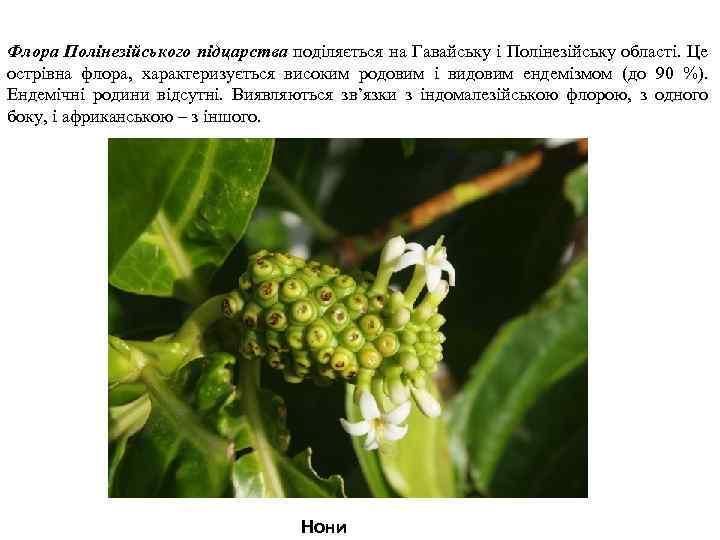Флора Полінезійського підцарства поділяється на Гавайську і Полінезійську області. Це острівна флора, характеризується високим