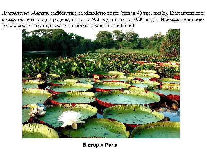 Амазонська область найбагатша за кількістю видів (понад 40 тис. видів). Ендемічними в межах області