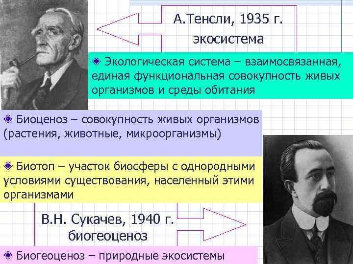А. Тенсли, 1935 г. экосистема Экологическая система – взаимосвязанная, единая функциональная совокупность живых организмов