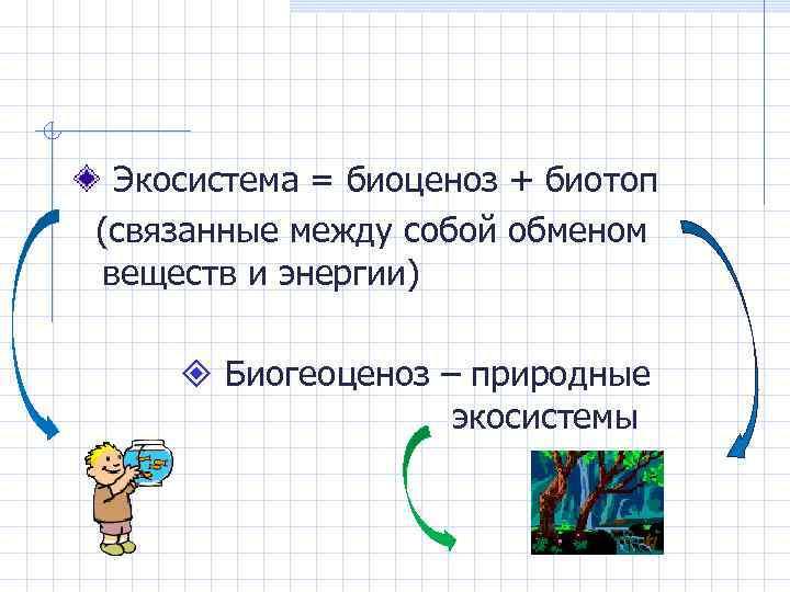 Экосистема = биоценоз + биотоп (связанные между собой обменом веществ и энергии) Биогеоценоз –