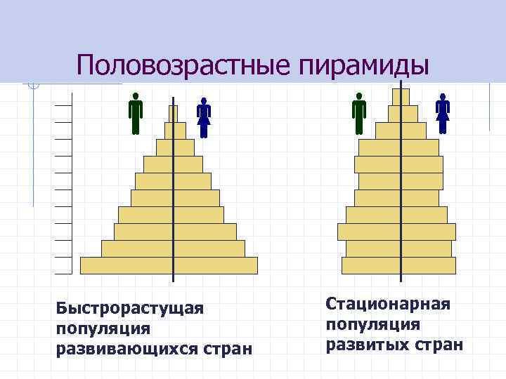 Половозрастные пирамиды Быстрорастущая популяция развивающихся стран Стационарная популяция развитых стран