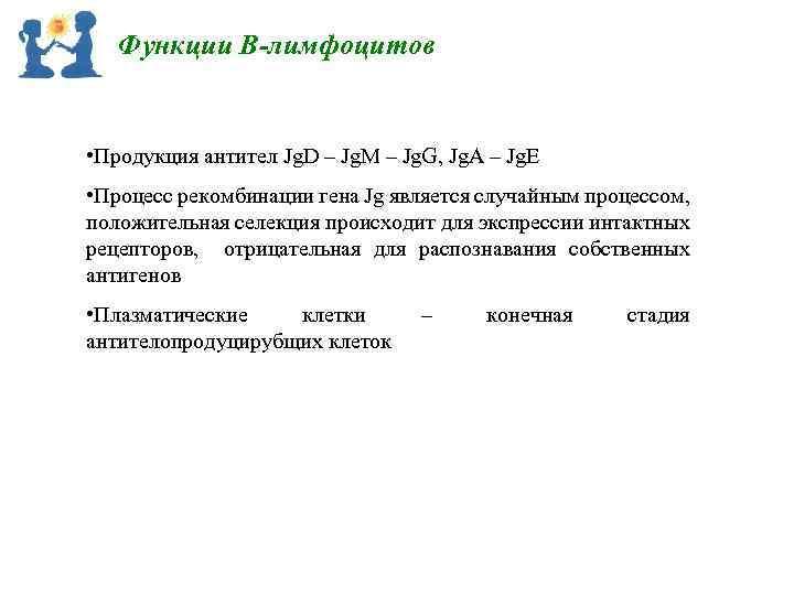 Функции В-лимфоцитов • Продукция антител Jg. D – Jg. M – Jg. G, Jg.