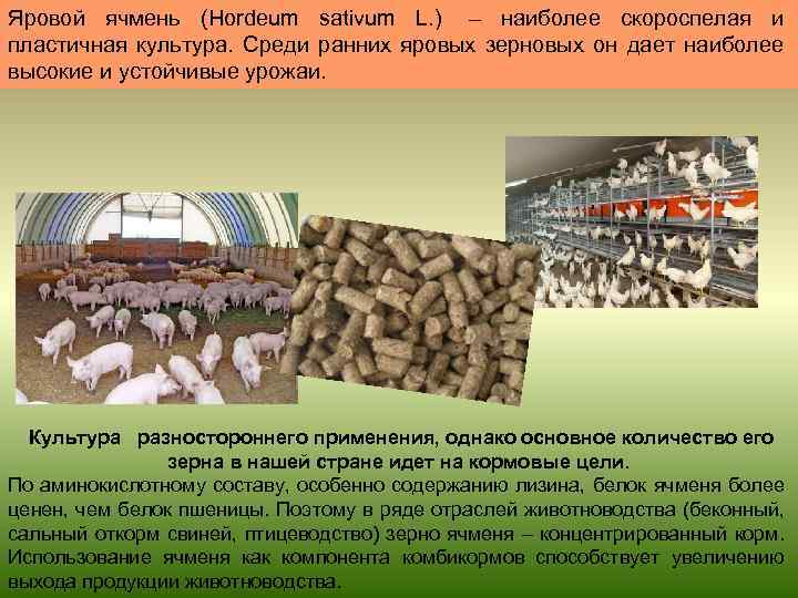 Ресурсосберегающая технология выращивания ярового ячменя 3