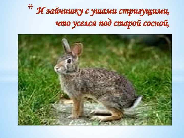 * И зайчишку с ушами стригущими, что уселся под старой сосной,