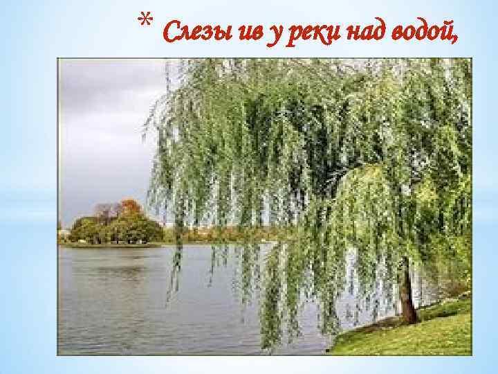 * Слезы ив у реки над водой,