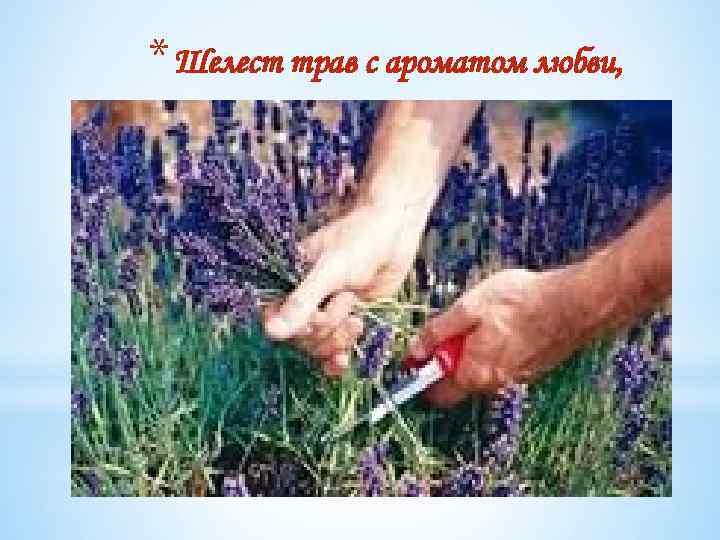 * Шелест трав с ароматом любви,