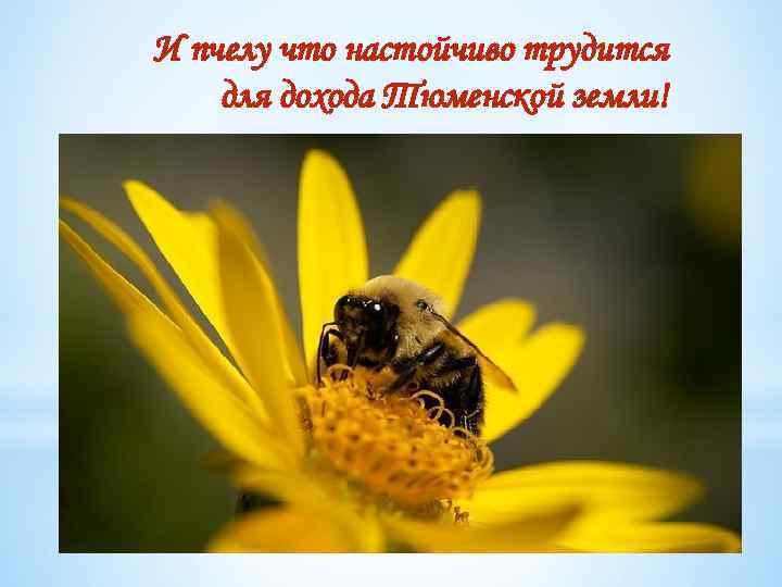 И пчелу что настойчиво трудится для дохода Тюменской земли!