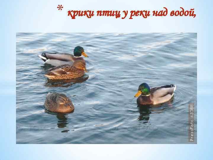 * крики птиц у реки над водой,