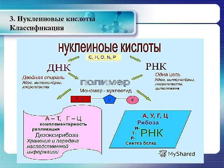 3. Нуклеиновые кислоты Классификация