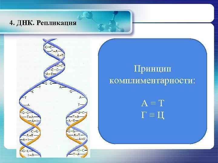 4. ДНК. Репликация Принцип комплиментарности: А=Т Г≡Ц