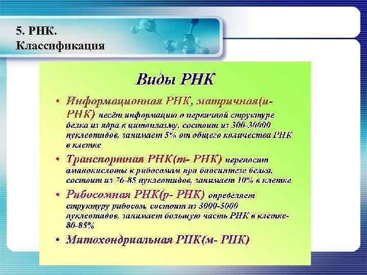 5. РНК. Классификация