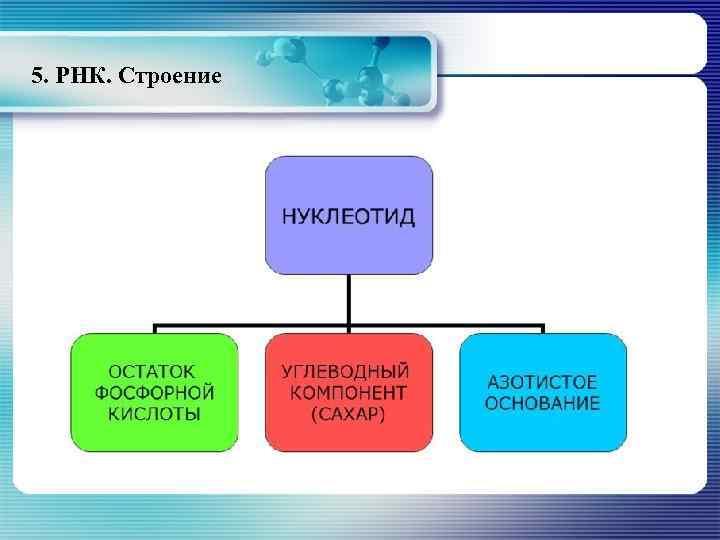 5. РНК. Строение