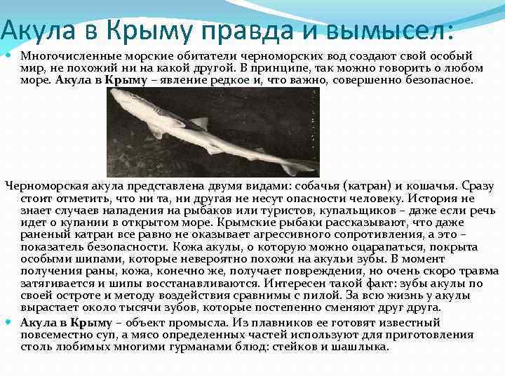 Акула в Крыму правда и вымысел: Многочисленные морские обитатели черноморских вод создают свой особый