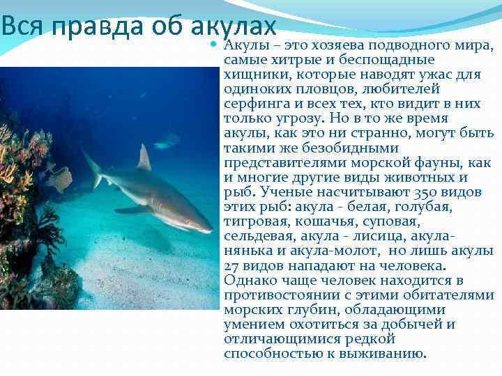 Вся правда об акулах Акулы – это хозяева подводного мира, самые хитрые и беспощадные