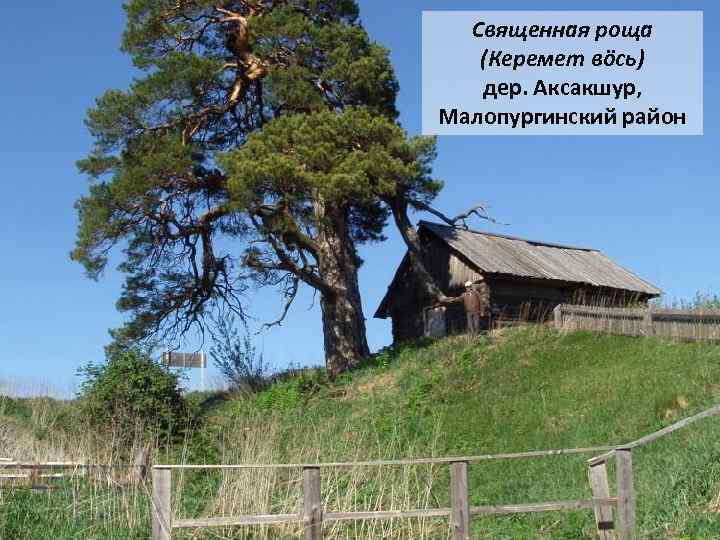 Священная роща (Керемет вöсь) дер. Аксакшур, Малопургинский район