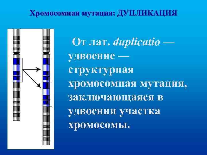 Хромосомная мутация: ДУПЛИКАЦИЯ От лат. duplicatio — удвоение — структурная хромосомная мутация, заключающаяся в
