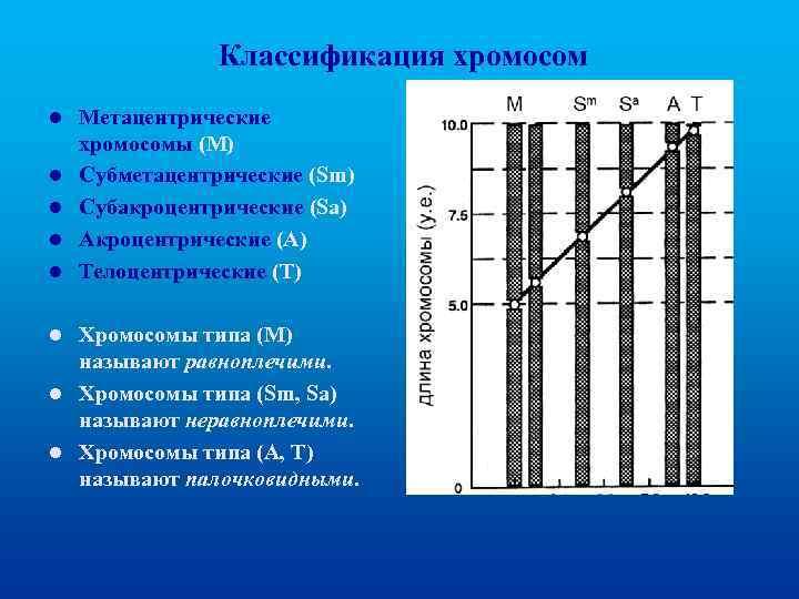 Классификация хромосом l l l Метацентрические хромосомы (М) Субметацентрические (Sm) Субакроцентрические (Sа) Акроцентрические (А)
