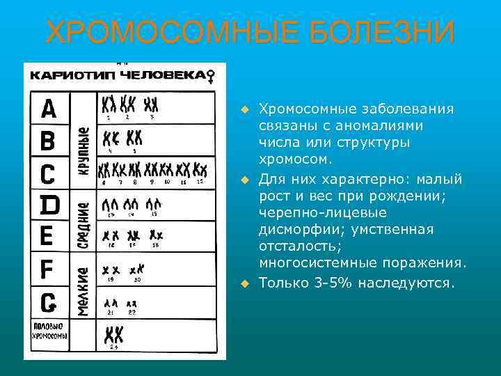 ХРОМОСОМНЫЕ БОЛЕЗНИ u u u Хромосомные заболевания связаны с аномалиями числа или структуры хромосом.