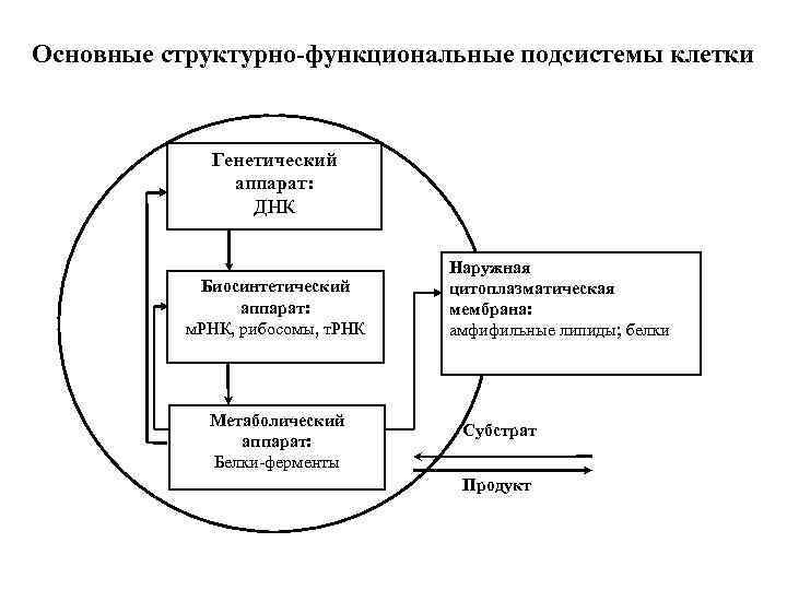 Основные структурно-функциональные подсистемы клетки Генетический аппарат: ДНК Биосинтетический аппарат: м. РНК, рибосомы, т. РНК