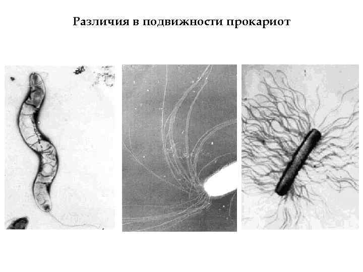 Различия в подвижности прокариот