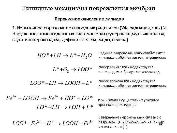 Липидные механизмы повреждения мембран Перекисное окисление липидов 1. Избыточное образование свободных радикалов (УФ, радиация,