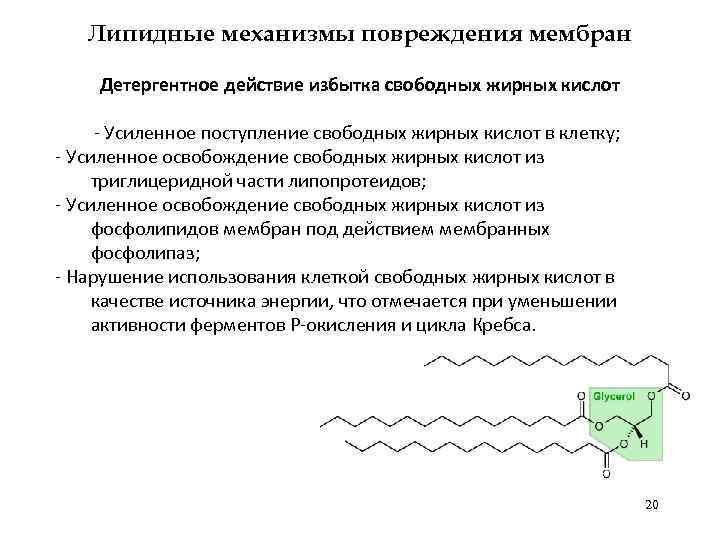 Липидные механизмы повреждения мембран Детергентное действие избытка свободных жирных кислот - Усиленное поступление свободных