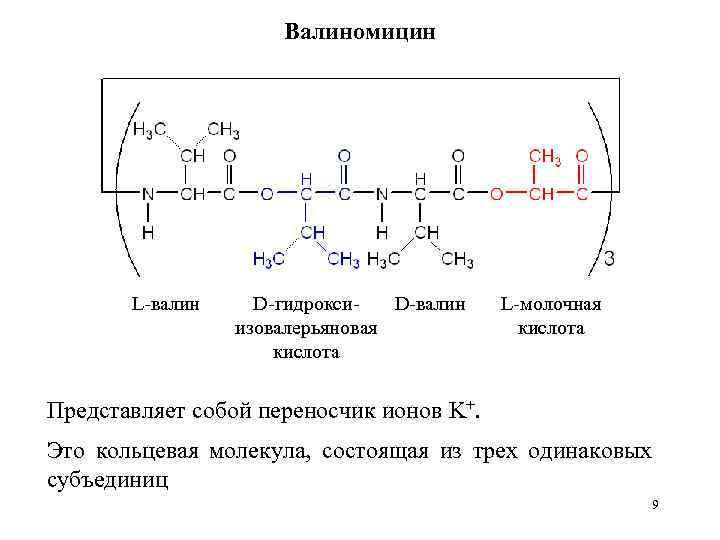 Валиномицин L-валин D-гидроксиизовалерьяновая кислота L-молочная кислота Представляет собой переносчик ионов K+. Это кольцевая молекула,