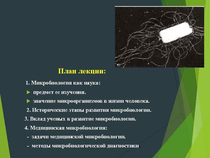 План лекции: 1. Микробиология как наука: предмет ее изучения. значение микроорганизмов в жизни человека.