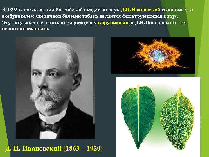 В 1892 г. на заседании Российской академии наук Д. И. Ивановский сообщил, что возбудителем