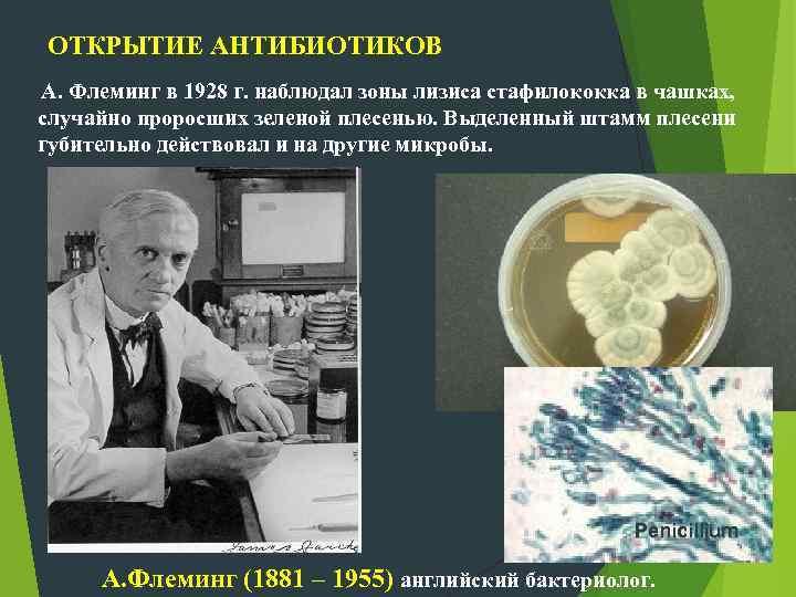 ОТКРЫТИЕ АНТИБИОТИКОВ А. Флеминг в 1928 г. наблюдал зоны лизиса стафилококка в чашках, случайно