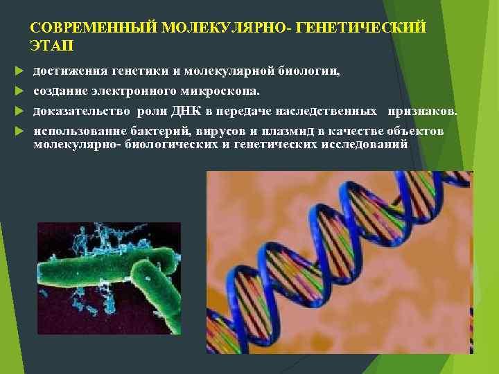 СОВРЕМЕННЫЙ МОЛЕКУЛЯРНО- ГЕНЕТИЧЕСКИЙ ЭТАП достижения генетики и молекулярной биологии, создание электронного микроскопа. доказательство роли