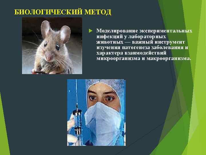 БИОЛОГИЧЕСКИЙ МЕТОД Моделирование экспериментальных инфекций у лабораторных животных — важный инструмент изучения патогенеза заболевания
