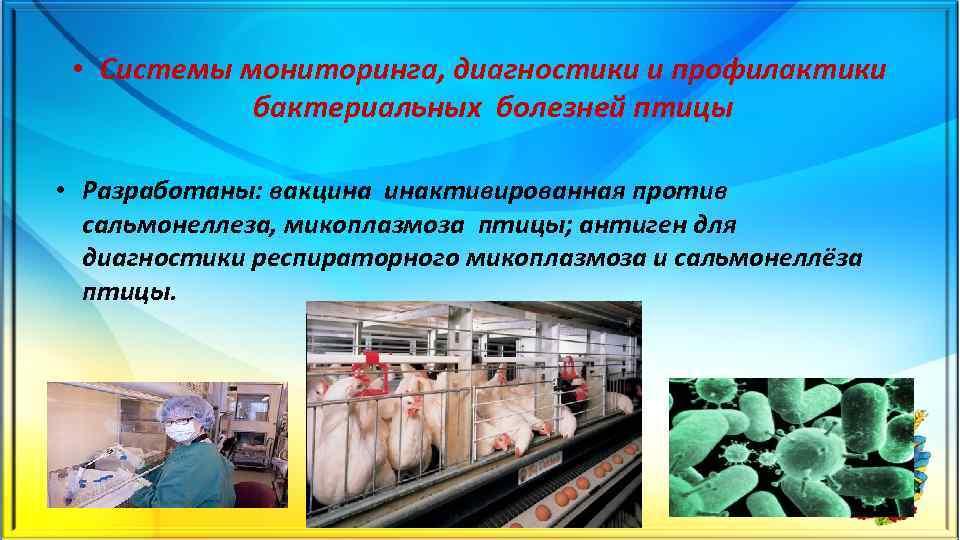 • Системы мониторинга, диагностики и профилактики бактериальных болезней птицы • Разработаны: вакцина инактивированная