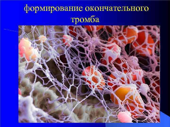 формирование окончательного тромба