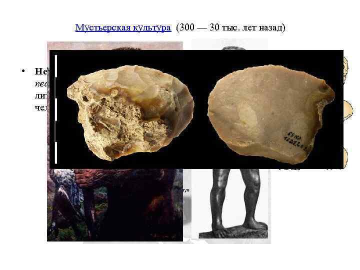 Мустьерская культура (300 — 30 тыс. лет назад) • Неандерта лец, человек неандертальский (лат.