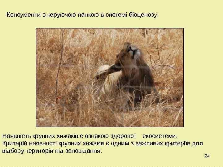 Консументи є керуючою ланкою в системі біоценозу. Наявність крупних хижаків є ознакою здорової екосистеми.