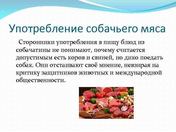 Употребление собачьего мяса Сторонники употребления в пищу блюд из собачатины не понимают, почему считается