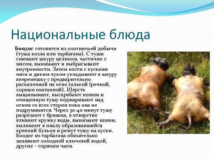 Национальные блюда Боодог готовится из охотничьей добычи (туша козла или тарбагана). С туши снимают