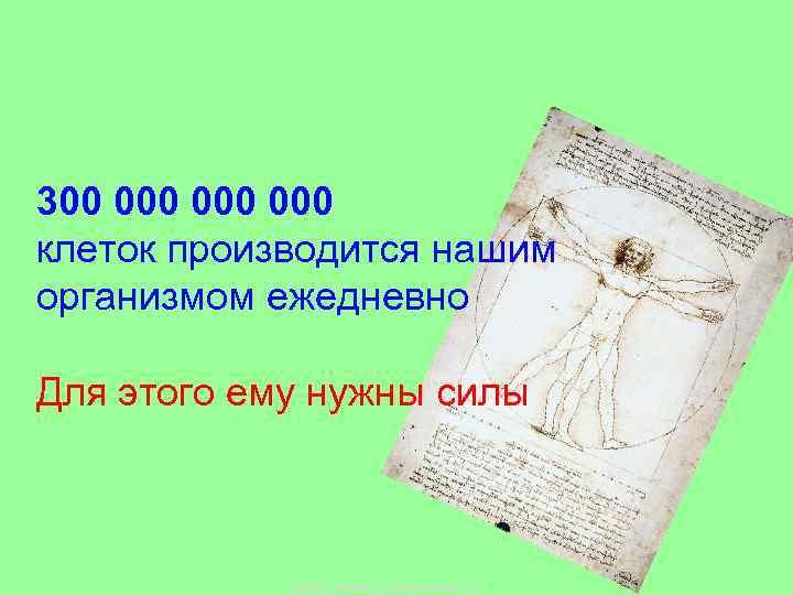 300 000 000 клеток производится нашим организмом ежедневно Для этого ему нужны силы Copyright
