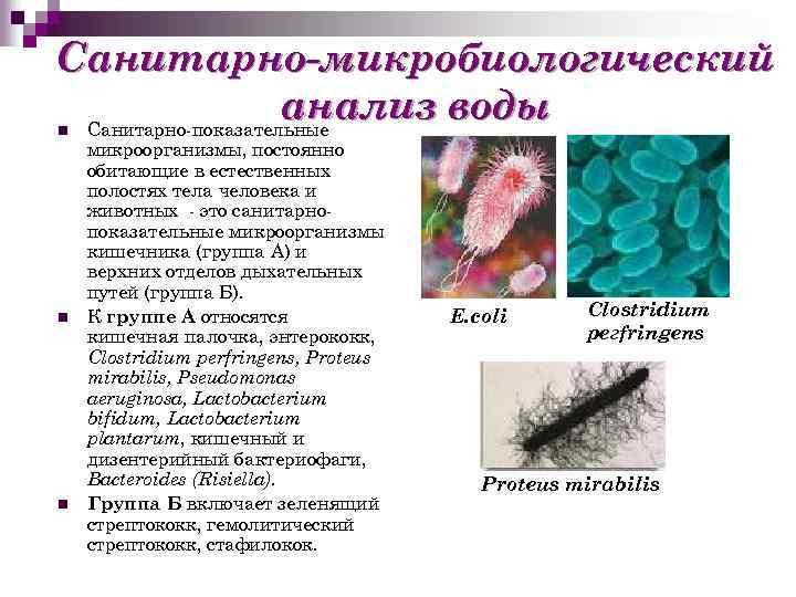 Санитарно-микробиологический анализ воды Санитарно-показательные n n n микроорганизмы, постоянно обитающие в естественных полостях тела