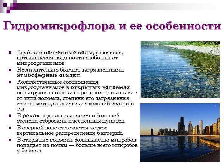 Гидромикрофлора и ее особенности n n n Глубокие почвенные воды, ключевая, артезианская вода почти