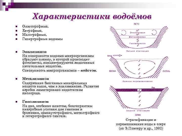 Характеристики водоёмов n n Олиготрофные, Евтрофные, Мезотрофные, Гипертрофные водоемы n Эпилимнион На поверхности водоема