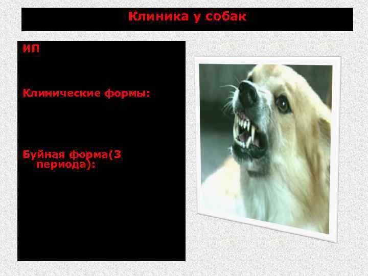 Клиника у собак ИП от нескольких дней до 1 года и (в среднем 3.