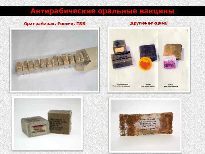 Антирабические оральные вакцины Оралрабивак, Россия, ПЗБ Другие вакцины