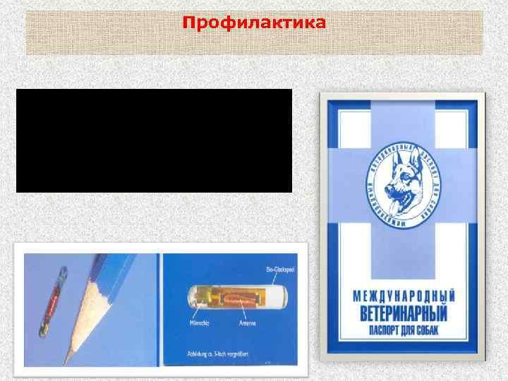 Профилактика Ежегодная регистрация и перерегистрация собак, контроль за соблюдением правил их содержания