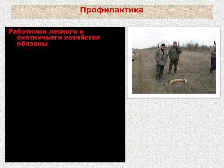 Профилактика Работники лесного и охотничьего хозяйства обязаны: - сообщать о подозрении на бешенство у