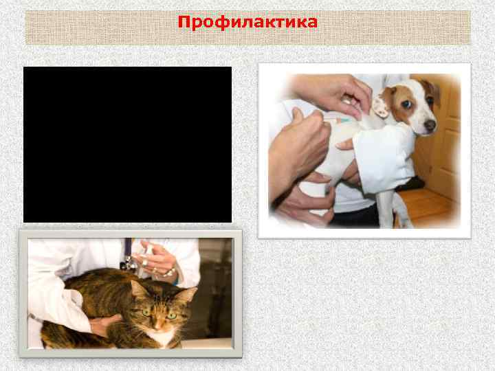 Профилактика Ежегодная профилактическая вакцинация собак, а в необходимых случаях и кошек.